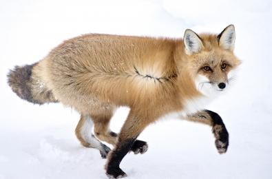 <h5>Nunavut_D821158</h5>