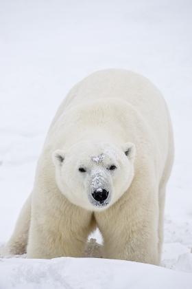 <h5>Arctic Bay_D4S4275</h5>