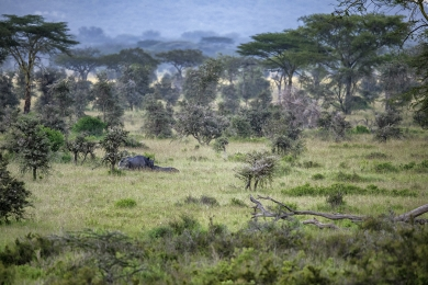 <h5>Rhino in the Serengeti</h5>