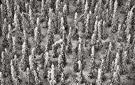 <h5>Yukon Aerial </h5>