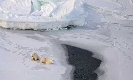 <h5>Polar Bears DZ78249.</h5>