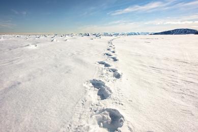 <h5>Bear Tracks D827608</h5>