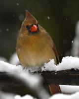 <h5>Cardinal DZ62130</h5>