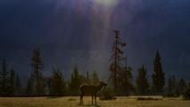 <h5>Jasper Elk</h5>