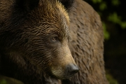 <h5>Khutzeymateen Grizzly Bear Sanctuary, BC</h5>