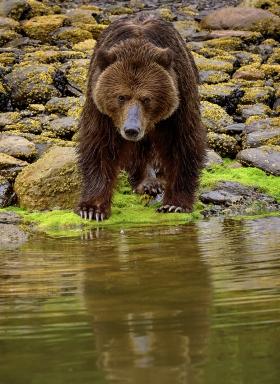 <h5>Khutzeymateen Grizzly Bear Sanctuary, BC  _DSC3986</h5>