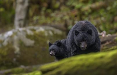 <h5>Great Bear Rainforest, BC  _DZ61970</h5>