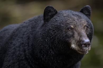 <h5>Great Bear Rainforest, BC  _DZ61926</h5>