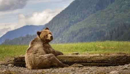 <h5>Khutzeymateen Grizzly Bear Sanctuary, BC  DSC5321</h5>