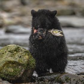 <h5>Great Bear Rainforest, BC  _DZ64724 </h5>