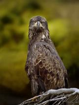 <h5>Great Bear Rainforest_DZ61168-</h5>