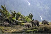 <h5>Great Bear Rainforest_Z724405</h5>