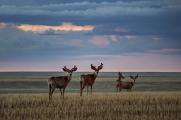 <h5>Saskatchewan Grasslands Grasslands _D857536</h5>