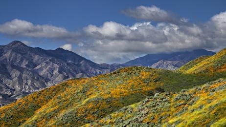 <h5>California Super Bloom _DZ64911 </h5>