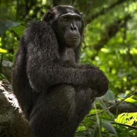 <h5>Uganda _Z725736 </h5>