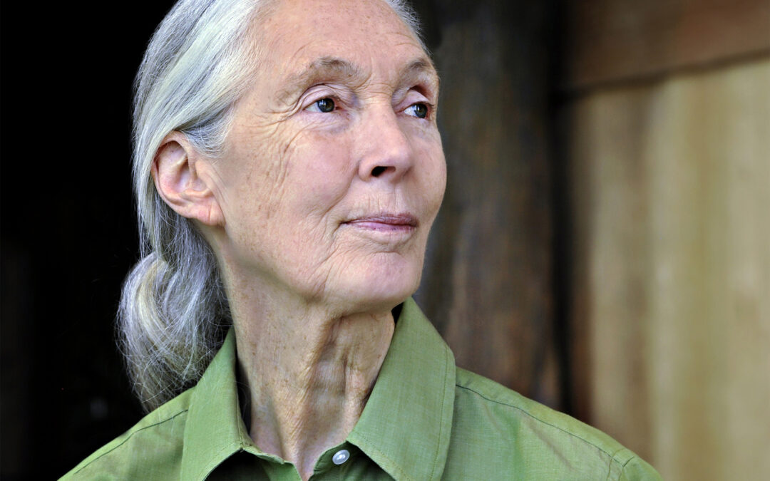 Planet Hope – 2nd Installment – Planet Hope for Wildlife – Kicks Off With Dr. Jane Goodall
